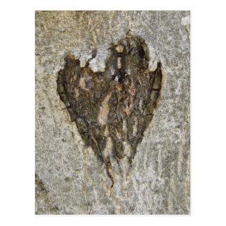 Amor de la naturaleza tarjeta postal