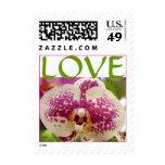 Amor de la orquídea