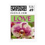 Amor de la orquídea sello