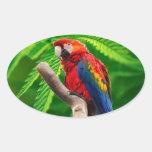 amor de la paz del macaw del escarlata colcomanias de oval
