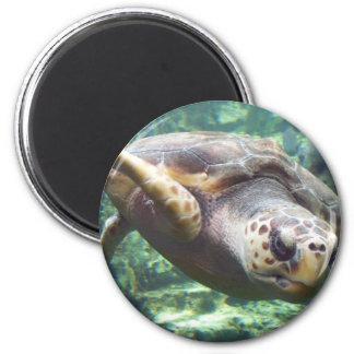 Amor de la tortuga imán redondo 5 cm
