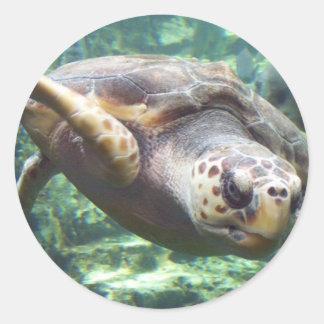Amor de la tortuga pegatina redonda