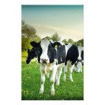 Amor de las vacas a mirar fijamente  papeleria de diseño