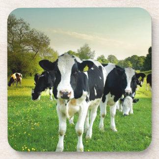 Amor de las vacas a mirar fijamente posavaso