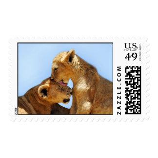 Amor de los leones del bebé estampilla