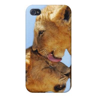Amor de los leones del bebé iPhone 4 carcasas