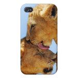 Amor de los leones del bebé iPhone 4 funda