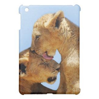Amor de los leones del bebé tan lindo