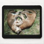 Amor de los pumas alfombrilla de ratones
