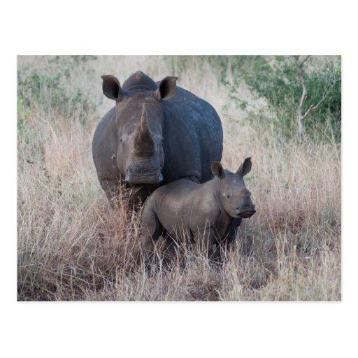 Amor de madre - postal del estilo del rinoceronte