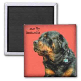 Amor de Rottweiler Imán Cuadrado