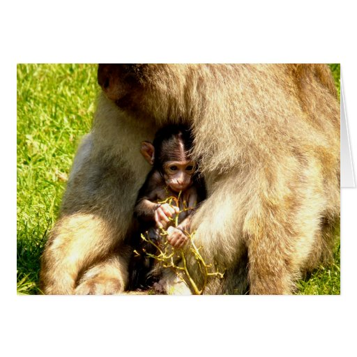 amor del bebé del mono de la madre felicitación