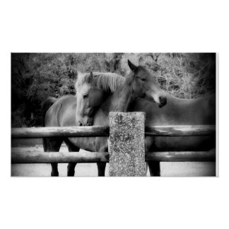 ¡Amor del caballo Abrazo de dos caballos Posters