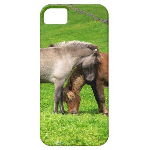 Amor del caballo iPhone 5 cárcasa