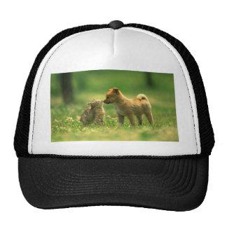 amor del catdog gorra