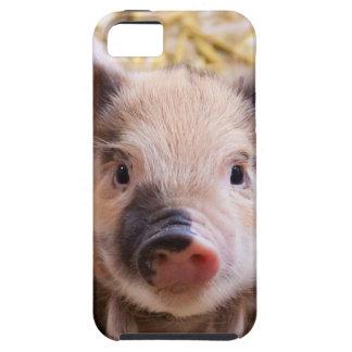 Amor del cerdo de Happines iPhone 5 Cárcasa