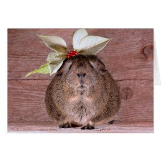 Amor del conejillo de Indias Tarjeta De Felicitación