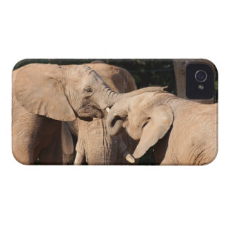 Amor del elefante Case-Mate iPhone 4 carcasa