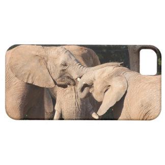 Amor del elefante iPhone 5 Case-Mate protectores