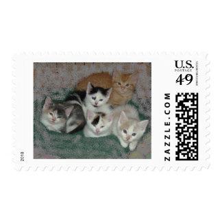 Amor del gatito timbres postales