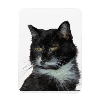 Amor del gato callejero imanes rectangulares