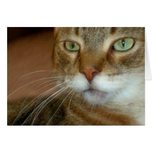 Amor del gato de Tabby Felicitacion