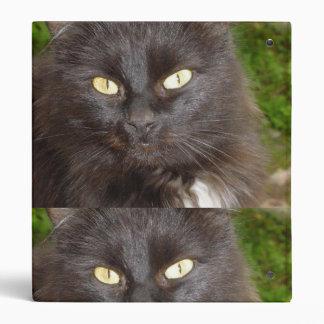 amor del gato negro de la carpeta