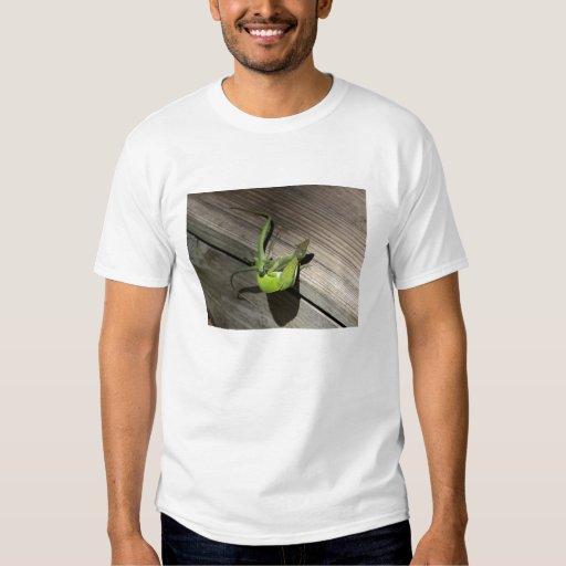 Amor del lagarto remeras