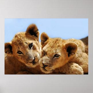 Amor del león del bebé impresiones