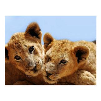 Amor del león del bebé postales