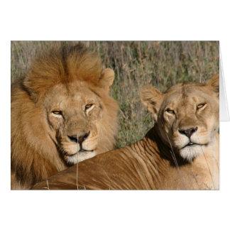 Amor del león - tarjeta