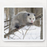 Amor del oposum alfombrilla de raton