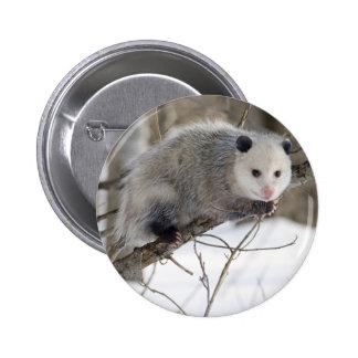 Amor del oposum pins