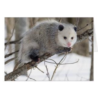 Amor del oposum tarjetas