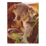 Amor del oso de koala postal