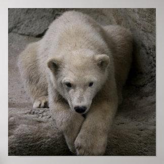Amor del oso polar impresiones