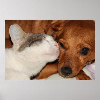 Amor del perro y del gato poster