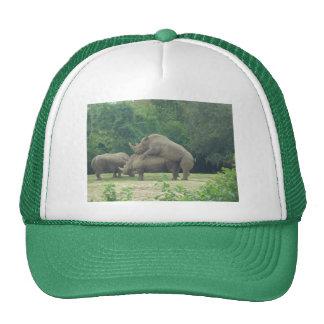 Amor del rinoceronte gorros