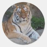 Amor del tigre etiqueta redonda