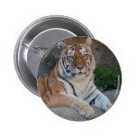 Amor del tigre pin