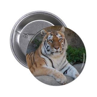 Amor del tigre pin redondo de 2 pulgadas