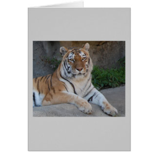 Amor del tigre tarjeta de felicitación