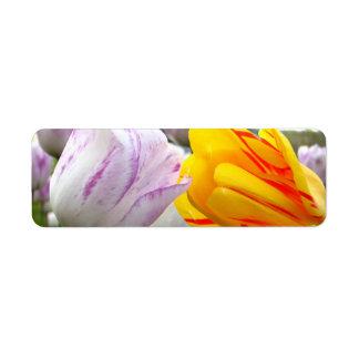 Amor del tulipán etiqueta de remite