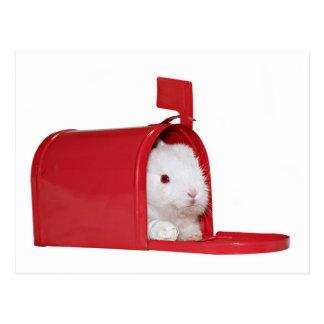 Amor en el correo tarjetas postales
