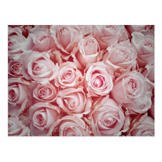 Amor en fondo rosa claro de los rosas por el tarjetas postales