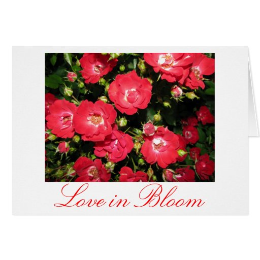 Amor en tarjeta de la floración