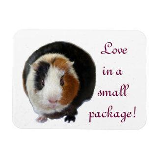 Amor en un pequeño paquete imanes rectangulares