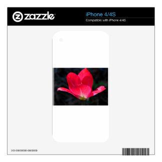 Amor firme iPhone 4S calcomanía