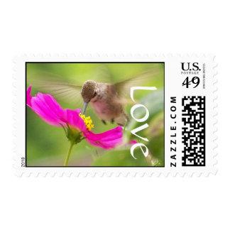Amor floral de la flor de la margarita del pájaro sello