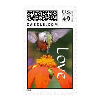 Amor floral de la flor del girasol del pájaro del sello